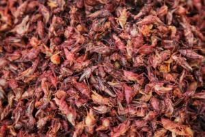 Chapulines snack khas daerah Oaxaca,  Mexico