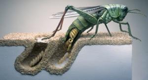 ilustrasi belalang bertelur